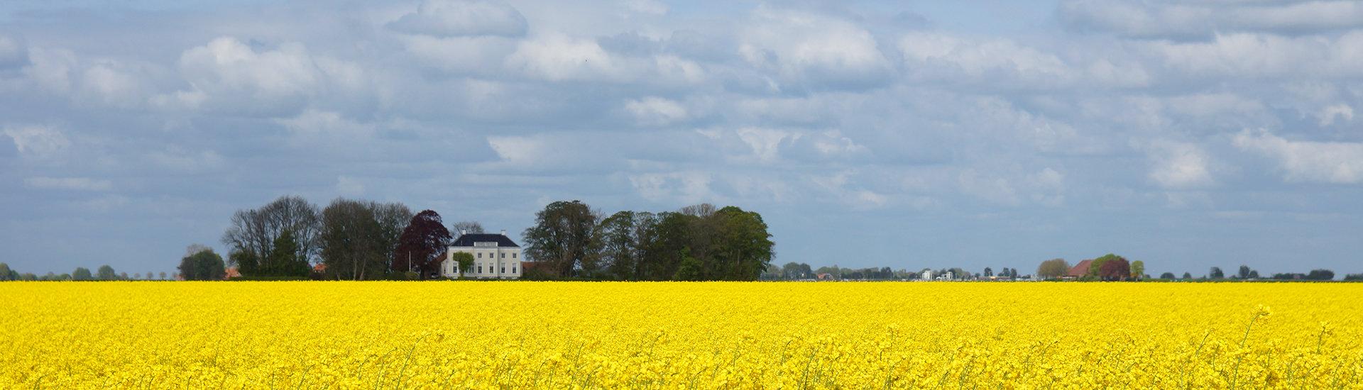 Koolzaadveld met boerderij